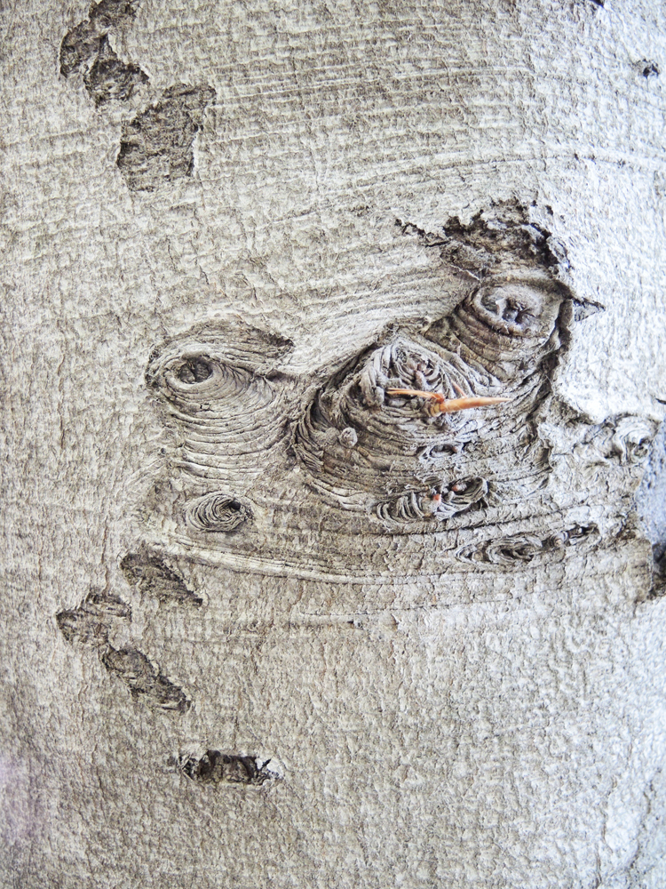 http://www.mungbeing.com/images/callie_danae_hirsch-expressive_tree-02.jpg